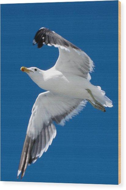 Gull In Flight Wood Print by Karen E Phillips