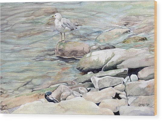 Gull On The Rocks Wood Print