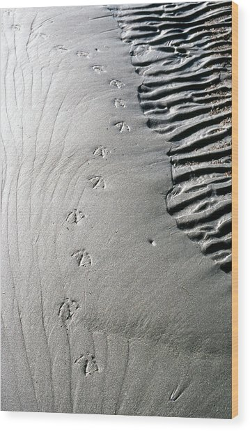 Gull Prints Wood Print
