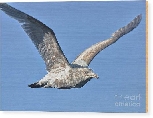 Gull Wings Wood Print by Phillip Garcia