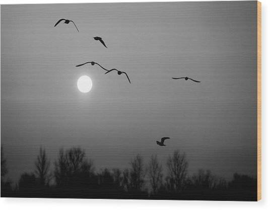 Gulls On The Vistula River Wood Print