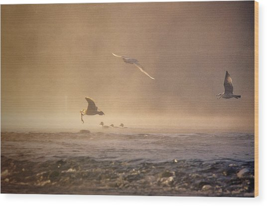 Gulls In The Fog Wood Print
