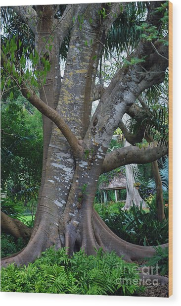 Gumby Tree Wood Print