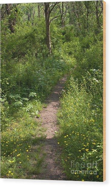 Gunpowder Falls Trail Wood Print by Chris Scroggins