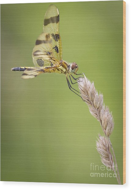 Halloween Pennant Wood Print by Ricky L Jones