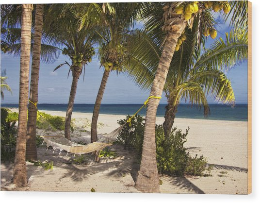 Hammock And Palm Trees  Wood Print
