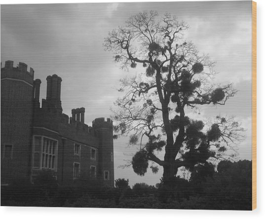 Hampton Court Tree Wood Print