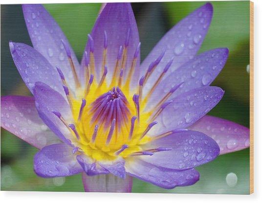 Hana Water Lily Wood Print