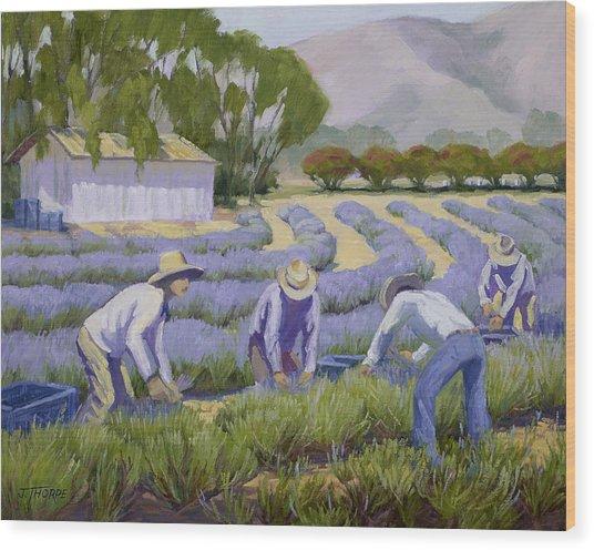 Hand-picked Lavender Wood Print