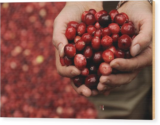 Handful Of Fresh Cranberries Wood Print
