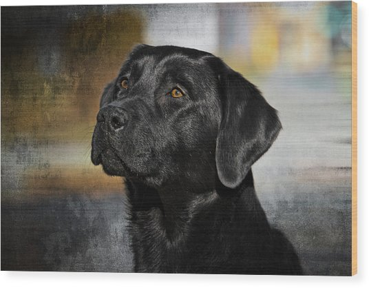 Handsome Black Lab Wood Print