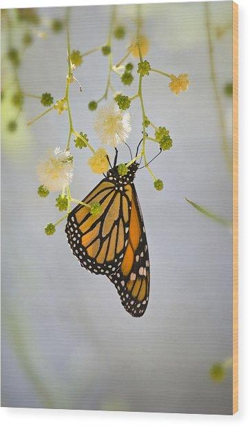 Hang On  Wood Print