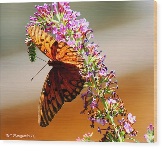 Hanging Butterfly Wood Print