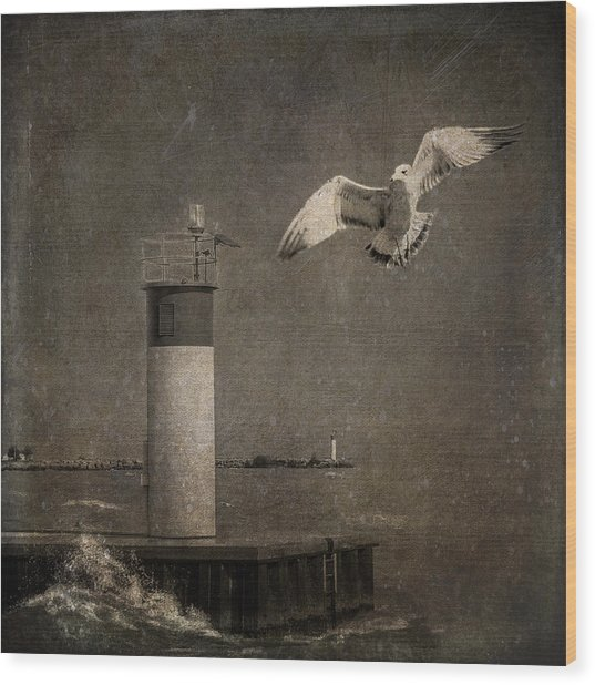 Happy And Free As A Seagull Wood Print