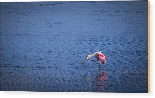 Happy Spoonbill Wood Print