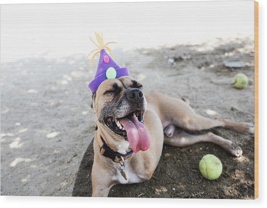 Happy Tripod Boxer Mix With A Birthday Wood Print