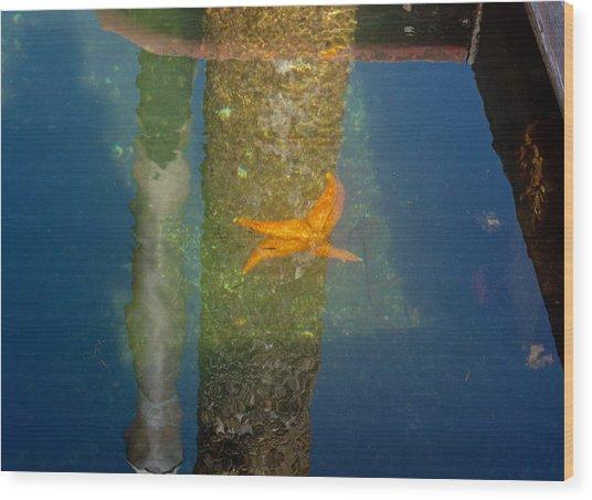 Harbor Star Fish Wood Print