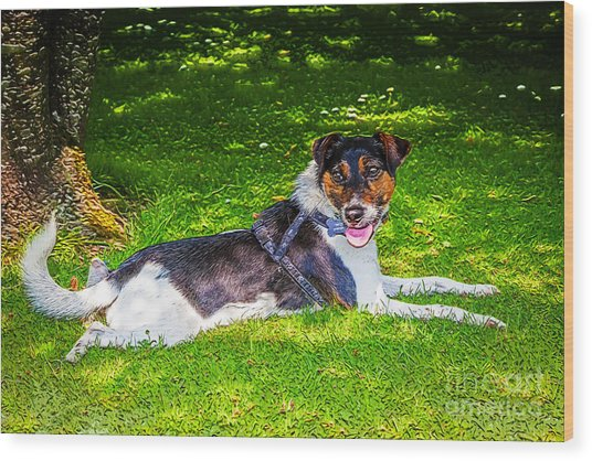 Harley Resting In Dappled Shade Wood Print