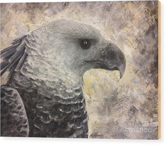 Harpy Eagle Study In Acrylic Wood Print