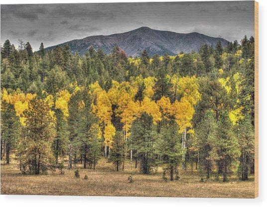 Hart Prairie Wood Print