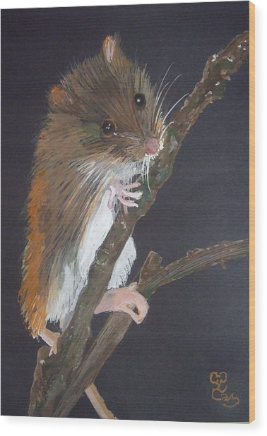 Harvest Mouse Wood Print