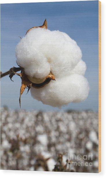 Harvest Ready Cotton Boll Wood Print