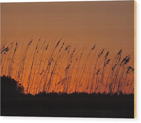 Harvest Sky And Sea Oats Wood Print