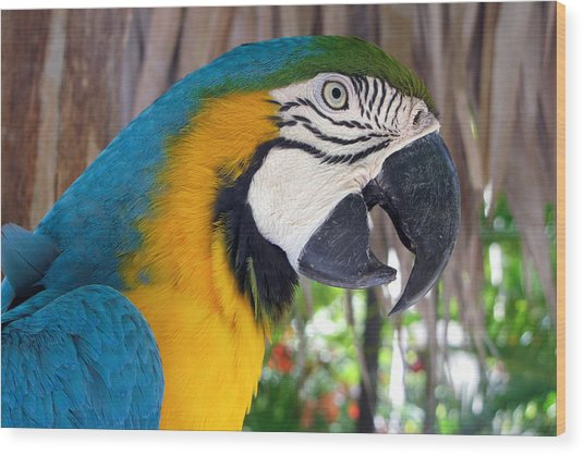 Harvey The Parrot 2 Wood Print