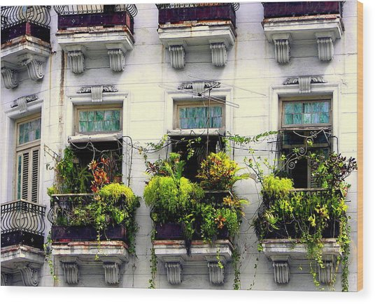 Havana Windows Wood Print