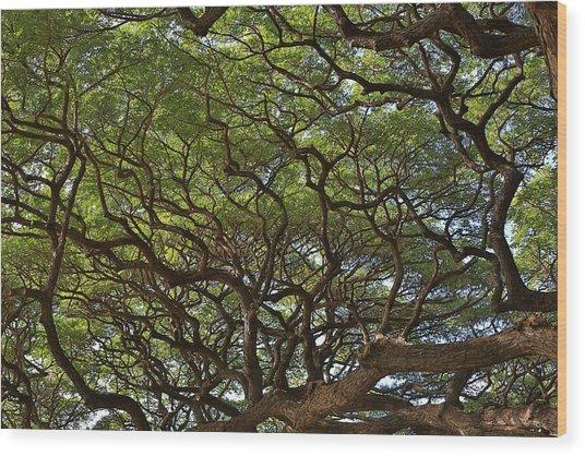Hawaiian Banyan Tree Wood Print by Sam Amato
