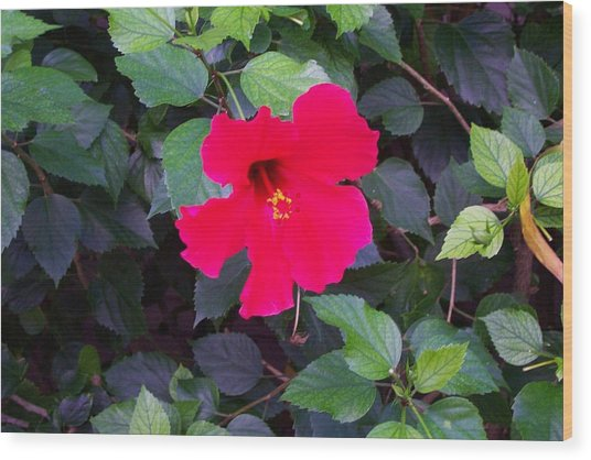 Hawaiian Flower Wood Print