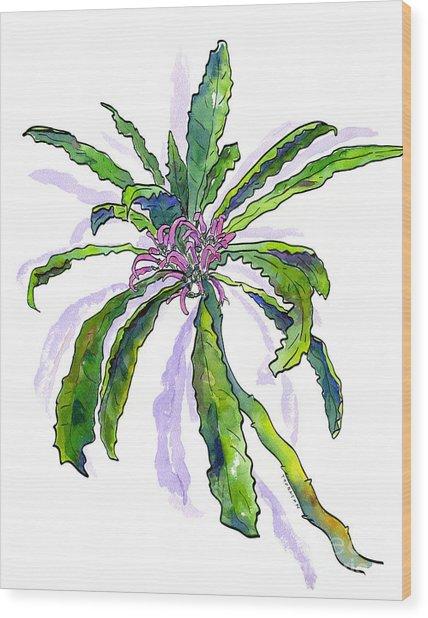 Hawaiian Haha Plant Cyanea Stictophylla Wood Print