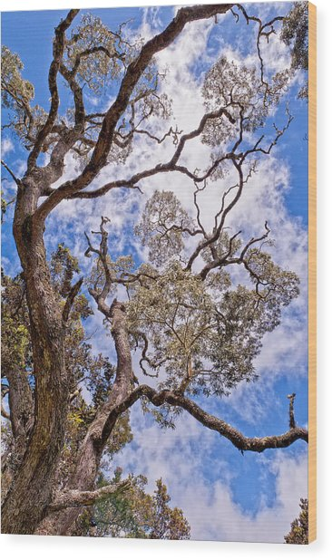 Wood Print featuring the photograph Hawaiian Sky by Jim Thompson