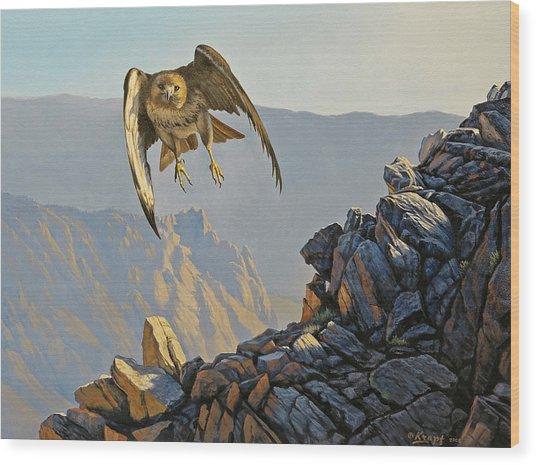 Hawk Above Beartooth Pass Wood Print