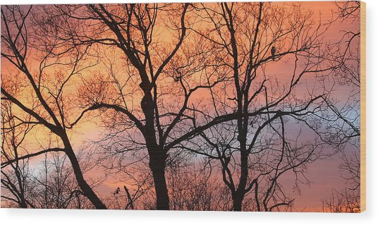 Hawk At Sunrise Wood Print