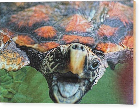 Hawk Billed Turtle Wood Print