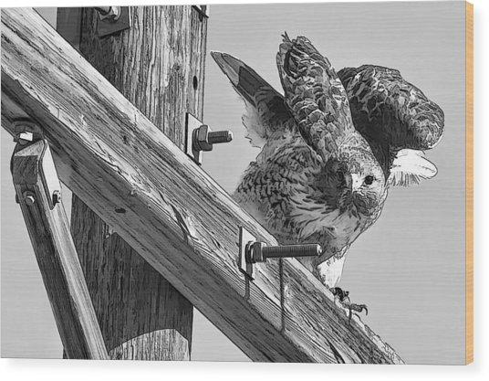 Hawk Eye Wood Print