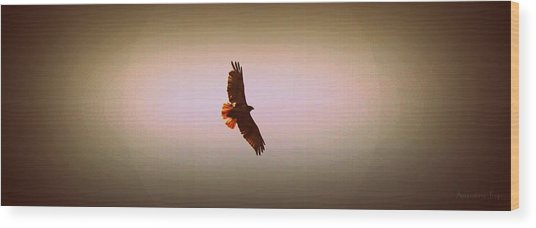 Hawk Eyes II Wood Print by Augustina Trejo