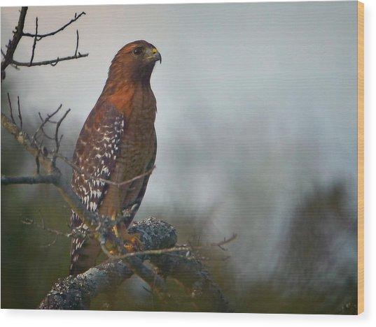 Hawk In The Mist Wood Print