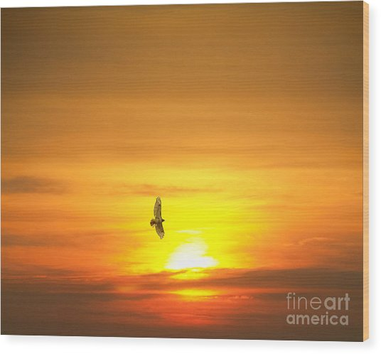 Hawk Into The Sunset Wood Print
