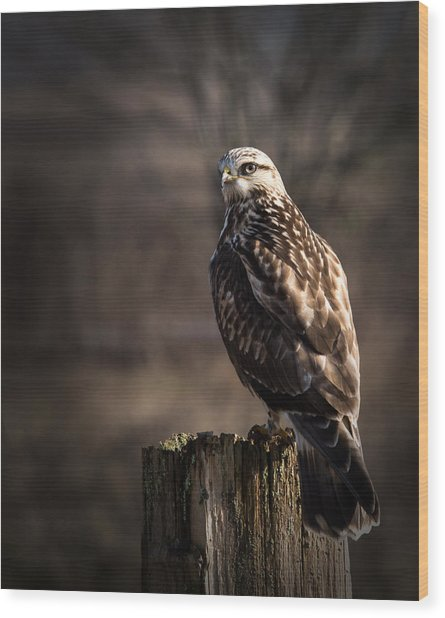 Hawk On A Post Wood Print
