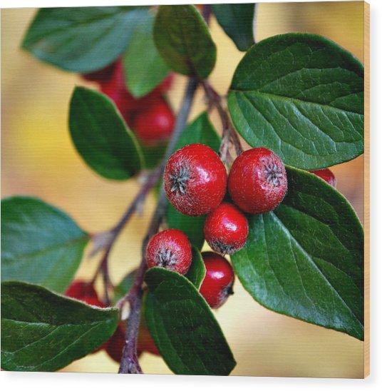 Hawthorn Berries Wood Print