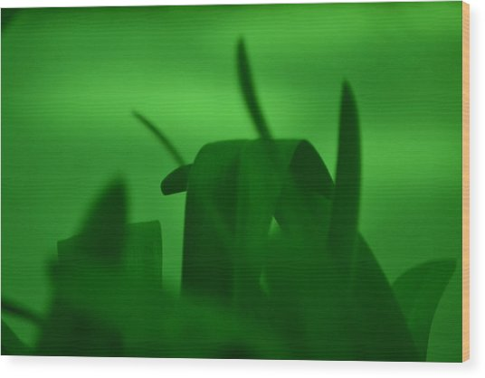 Haze Of Green Wood Print by Kiros Berhane