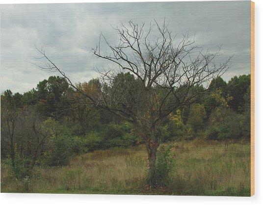 Hazy Forest No.3 Wood Print by Carla Pivonski