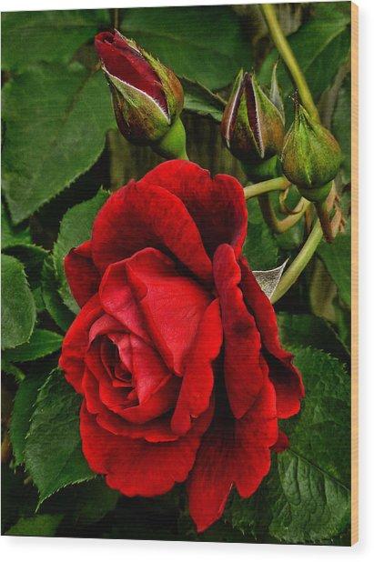 Hdr Rose Wood Print