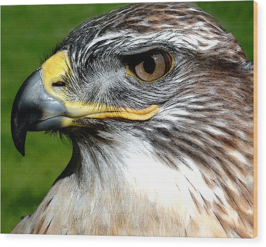 Head Portrait Of A Eagle Wood Print