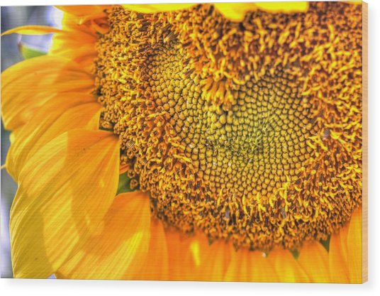 Heart-felt Sunflower Wood Print