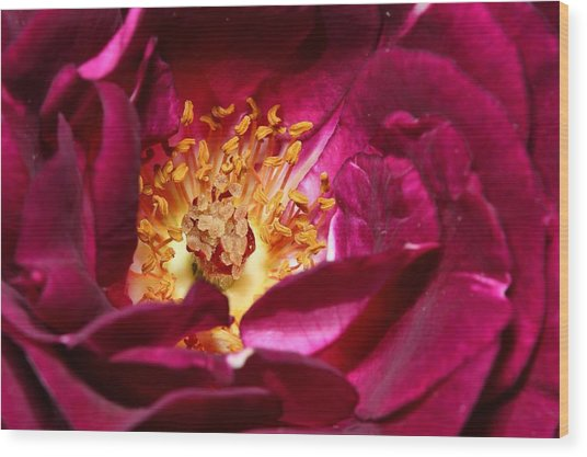 Heart O' The Rose Wood Print by Mike Farslow
