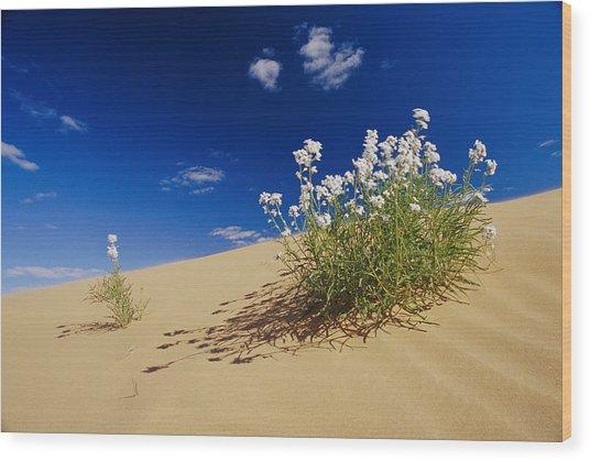 Hearty Wild Stock Wildflowers Growing Wood Print by Jason Edwards