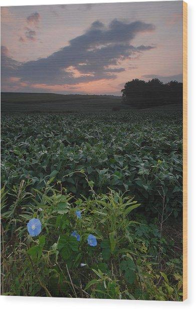 Heavenly Blue Wood Print